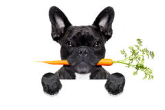 Healthy food dog Stock Image