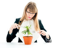 Healthy Food For Business Woman Stock Photography