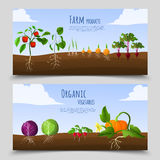 Healthy Food Horizontal Banners Stock Images