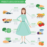 Healthy food for human body. Healthy eating infographic. Food and drink.. Vector illustration Stock Images
