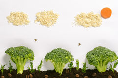 Healthy food landscape Royalty Free Stock Images