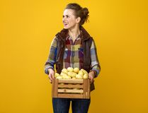Happy woman grower with box of potatoes looking at copy space. Healthy food to your table. happy modern woman grower in checkered shirt isolated on yellow with Royalty Free Stock Photos