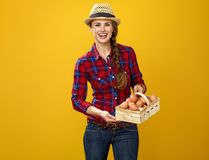 Woman grower isolated on yellow background basket with eggs. Healthy food to your table. Portrait of happy young woman grower in checkered shirt isolated on Royalty Free Stock Images
