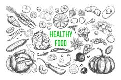 Healthy food vector. Healthy food. Vegetarian Big Set. Vector hand drawn isolated elements on white. Sketch style royalty free illustration