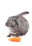 Healthy foods. Rabbit with carrot isolated on white Stock Photography