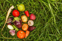 Healthy foods. autumn harvest. raw food for vegetarians royalty free stock image