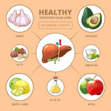 Healthy foods for liver. Medical health Royalty Free Stock Photography