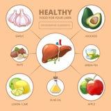 Healthy foods for liver. Medical health vector illustration