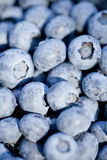 Healthy fresh blueberries macro closeup on market outdoor Royalty Free Stock Photos