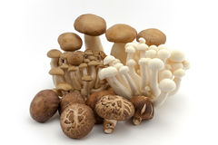 Healthy Fresh Mushrooms Stock Images