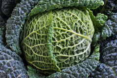 Healthy and fresh organic savoy cabbage Royalty Free Stock Photography