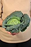 Healthy and fresh organic savoy cabbage Stock Image