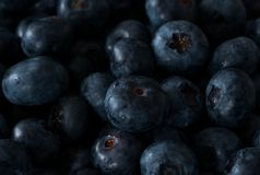Healthy fresh ripe juicy blueberries close up royalty free stock photo