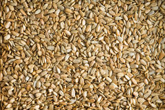 Healthy fresh roasted hulled sunflower seeds Stock Photos