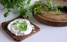 Healthy fresh sandwich with cheese and Winter Purslane Claytonia perfoliata . You can use them in fresh vegetable salads. The Wint stock photography