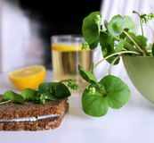 Healthy fresh sandwich with cheese and Winter Purslane Claytonia perfoliata . You can use them in fresh vegetable salads. Tea from nettle royalty free stock images