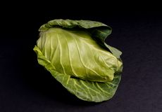Healthy Fresh Spring Cabbage Royalty Free Stock Images