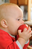 Healthy fruit. Portrait of a little child, young boy, eating read apple, healthy fruit stock images