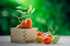 Healthy fruit with fresh Red Sweet tomatoes in a box wood Royalty Free Stock Photo