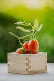 Healthy fruit with fresh Red Sweet tomatoes in a box wood Royalty Free Stock Images