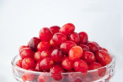 Healthy Fruits, Gem-quality Fruits, British Columbia, Canada, Cranberries, Red Berries, stock photo