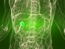 Healthy gall bladder Royalty Free Stock Photos