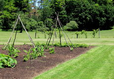 Healthy garden set in middle of landscaped lawn Royalty Free Stock Photo