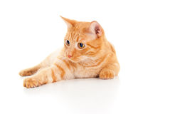 Healthy ginger cat lying on the floor Royalty Free Stock Image