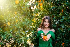 Healthy girl in orange orchard. Beautiful young woman, outdoors at sunset in a orange orchard, looking at camera and smiling, holding an orange fruit. Healthy stock images
