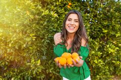 Healthy girl in orange orchard. Happy young woman, outdoors at sunset in a orange orchard, holding many oranges. Happiness and healthy lifestyle concept, skin royalty free stock photography