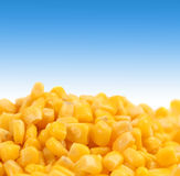 Healthy grain corn close-up. Stock Photo