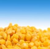 Healthy grain corn close-up. Stock Photo