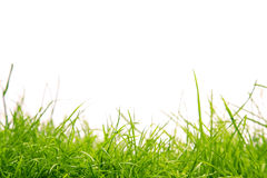 Healthy grass royalty free stock photo