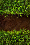 At healthy grass growing in soil pattern Stock Photo