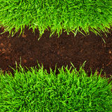 Healthy grass in soil. Healthy grass growing in soil pattern Royalty Free Stock Photos
