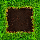 Healthy grass and soil. Frame Stock Photos