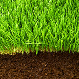 Healthy grass and soil Royalty Free Stock Images