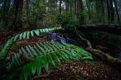 Fern plants thriving in forest. Healthy green fern plants growing along creek in dense wilderness stock photo