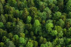 Healthy green forest Royalty Free Stock Images