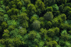 Healthy green forest with tree tops Stock Photography