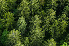 Healthy green forest with tree tops Royalty Free Stock Photos
