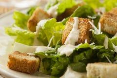 Healthy Green Organic Caesar Salad Royalty Free Stock Image