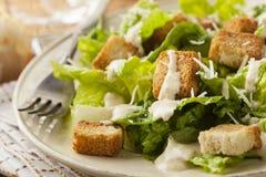 Healthy Green Organic Caesar Salad Royalty Free Stock Images