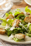 Healthy Green Organic Caesar Salad Royalty Free Stock Photo