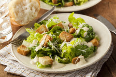 Healthy Green Organic Caesar Salad Royalty Free Stock Photography