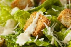 Healthy Green Organic Caesar Salad Stock Image