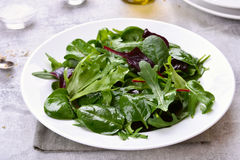Healthy green salad Stock Photography