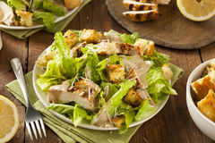 Healthy Grilled Chicken Caesar Salad. With Cheese and Croutons Royalty Free Stock Photo