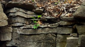 Healthy Growth on A Hill. royalty free stock photo