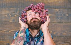 Healthy hair concept. confident man. harvest festival. bearded mature farmer with useful fruit. summer. seasonal vitamin royalty free stock photo
